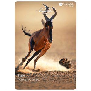 Plakat Tiger Flankenschütze Antilope gejagt